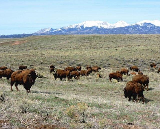 Colorado's Wolf Springs Ranch!