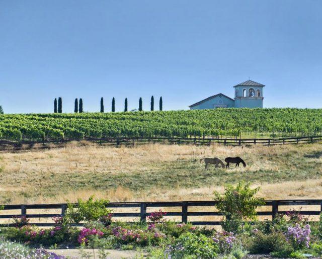 California Ranch, Church & Vineyard Auction!