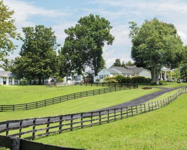 Johnny Depp's Horse Farm Auction!