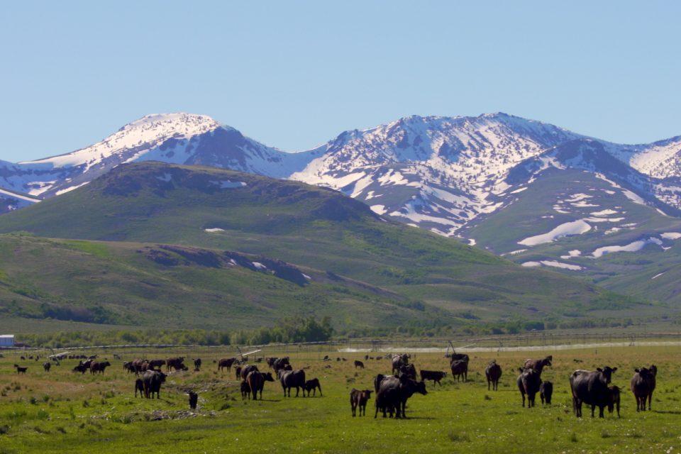 Bing Crosby's Nevada Get-Away Ranch!